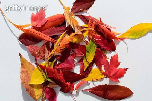 Close-Up Of Dry Leaves Against White Background - gettyimageskorea