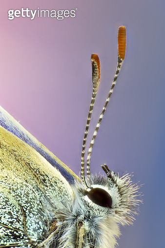 Butterfly extreme close up - gettyimageskorea