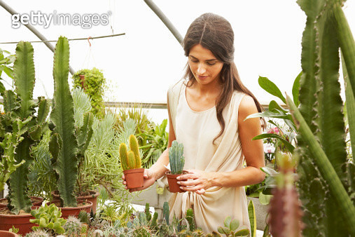 woman comparing cactuses in garden centre - gettyimageskorea
