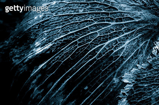 Full Frame Shot Of Leaf - gettyimageskorea