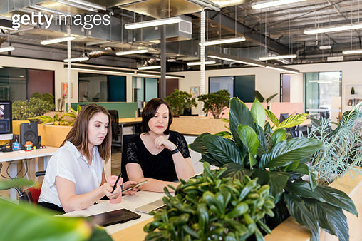 Woman In Wheelchair Collaborating In Modern Office With Coworker in Wheelchair Friendly Office - gettyimageskorea
