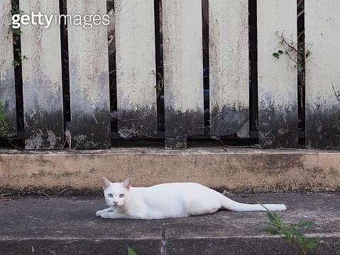 White Cat Eyes - gettyimageskorea