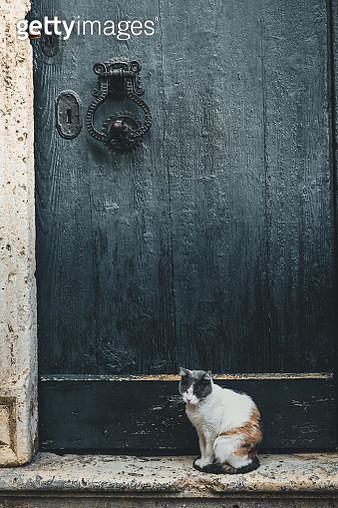 Wild cat posed in front of old wooden door with antique knocker - gettyimageskorea