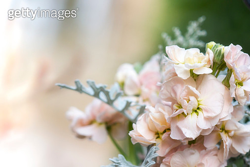 Partial bouquet against a blurred background - gettyimageskorea