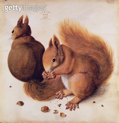 <b>Title</b> : Squirrels, 1512 (tempera on parchment)<br><b>Medium</b> : tempera on parchment<br><b>Location</b> : Private Collection<br> - gettyimageskorea