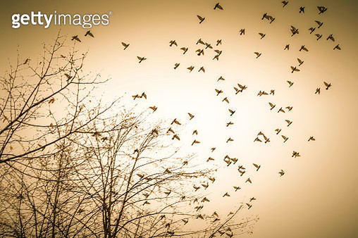 Birds in flight - gettyimageskorea