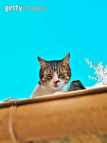 Portrait Of A Cat - gettyimageskorea