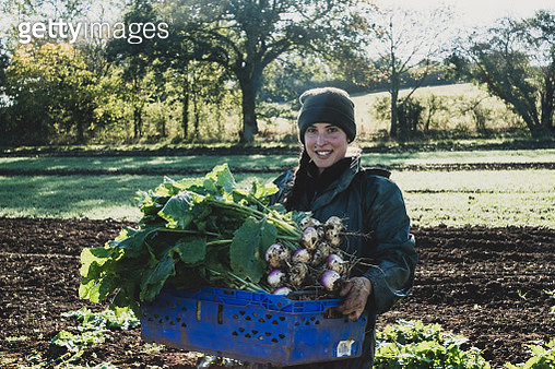 Smiling woman standing in field, holding blue crate with freshly harvested turnips, looking at camera. - gettyimageskorea