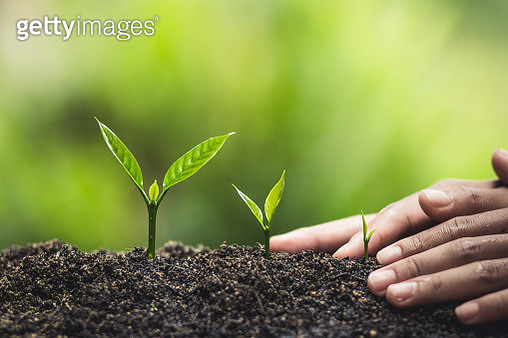 Cropped Hands Touching Seedlings - gettyimageskorea