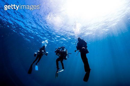 The underwater world of Maldives. - gettyimageskorea