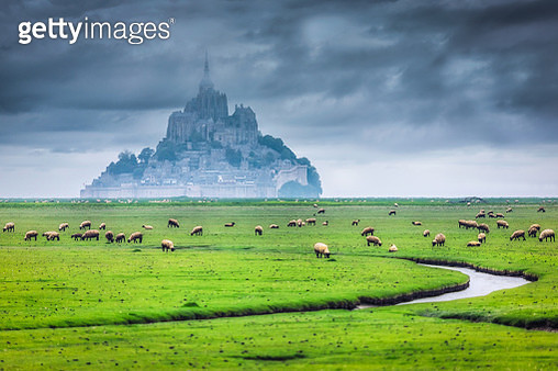 Sheep grazing in front of Mont Saint Michel, Normandy, France - gettyimageskorea