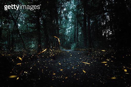 Fireflies in a deep forest, dark mystery mood. - gettyimageskorea