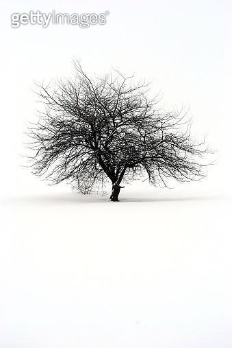 Lonely tree - gettyimageskorea