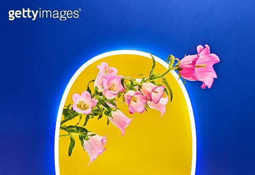 Neon Spring - gettyimageskorea