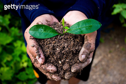 Close-Up Of Man Holding Plant - gettyimageskorea
