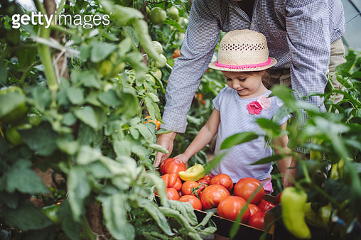 Granddaughter learning the art of growing vegetables from grandfather - gettyimageskorea
