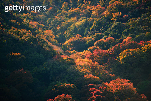 Autumn colors in Kyoto, Japan - gettyimageskorea