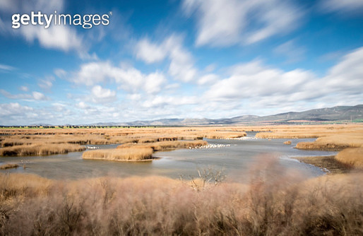 Long exposure of lagoons of water surrounded with reed-grasses with aquatic birds , Tablas de Daimiel, Spain. - gettyimageskorea