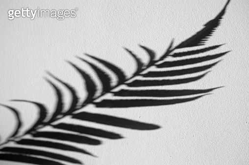 Shadow of palm leaf on the wall. Trendy summer background. Overlay effect. - gettyimageskorea