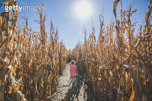 America's Heartland  Girl Walking in Corn Field - gettyimageskorea