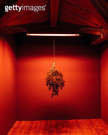 Plant Hanging In Illuminated Room - gettyimageskorea