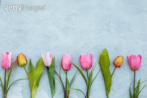 Colorful tulip flowers decoration on white wooden background - gettyimageskorea