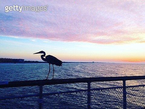 Silhouette Bird Perching On Railing By Sea Against Sky During Sunset - gettyimageskorea