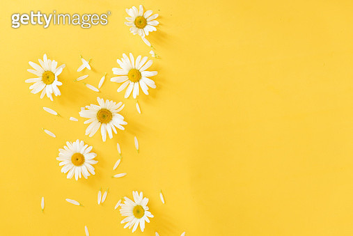 Yellow background with chamomile pattern. Flat layer, top view - gettyimageskorea