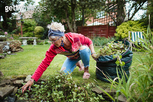Senior woman gathering weeds and garden waste in her compost bag. She is cleaning weeds from her garden pond. - gettyimageskorea