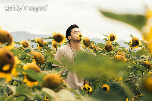 Young Man Smelling Sunflower At Farm - gettyimageskorea