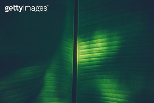 Full Frame Shot Of Leaf - gettyimageskorea