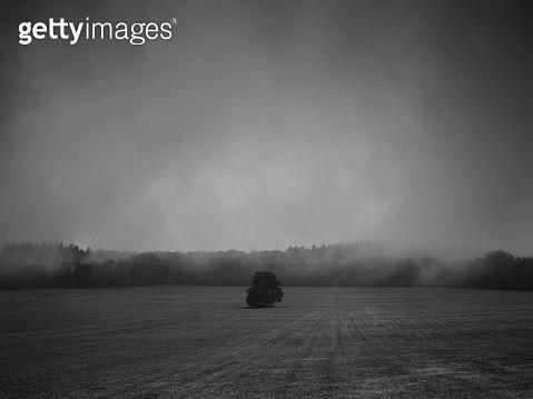 Dreamy misty scene, lone tree on a meadow - gettyimageskorea