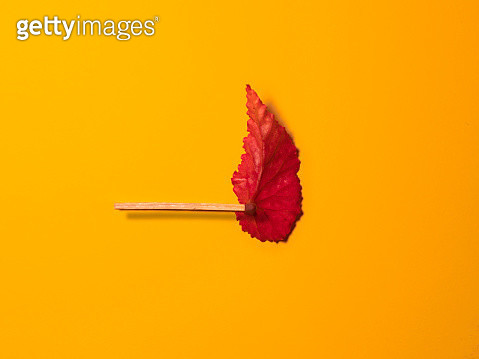 begonia leaf and match - gettyimageskorea