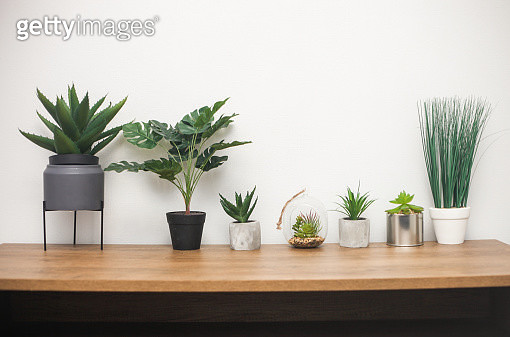 Indoor plants, succulent, cactus, monstera on wooden table against white wall - gettyimageskorea