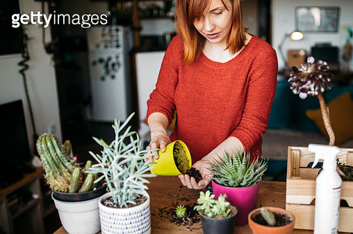 Young woman replanting succulent and adding some dirt into the pot. - gettyimageskorea