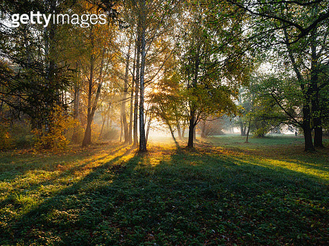 Autumn forest landscape with  morning sun rays streaming through the branches in fog - gettyimageskorea