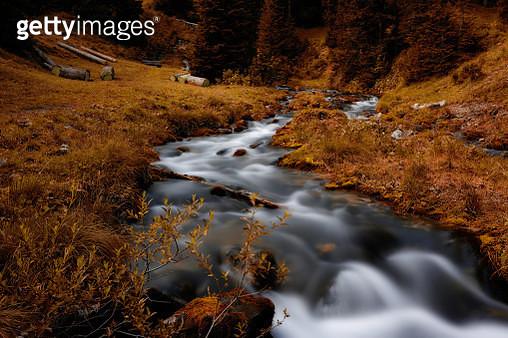 Stream Flowing Through Rocks In Forest - gettyimageskorea