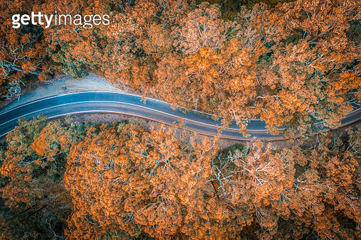 Road in the middle of forest in Australia - gettyimageskorea