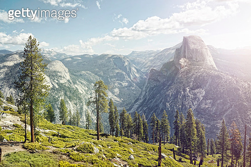 half dome in yosemite with foreground trees - gettyimageskorea