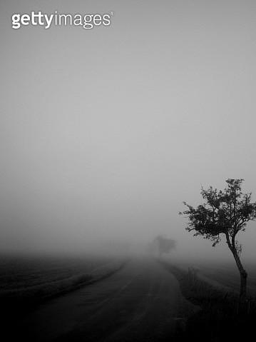 Tranquil rural scene, country road vanishing in fog - gettyimageskorea