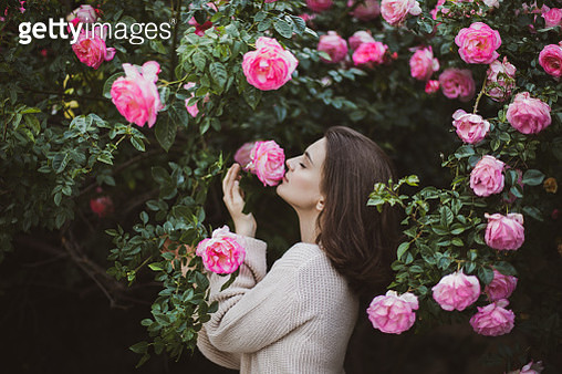 Beautiful young woman smelling pink rose flower. Brunette young woman in wool cardigan posing near blooming roses in a garden. The concept of perfume advertising. - gettyimageskorea