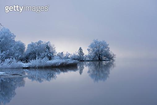 Tree reflection bohinj - gettyimageskorea