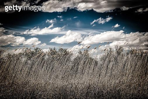 New mexico Prairie Grass - gettyimageskorea