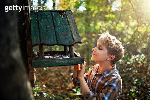 Little explorer observing old bird feeder in forest. Nikon D850. - gettyimageskorea