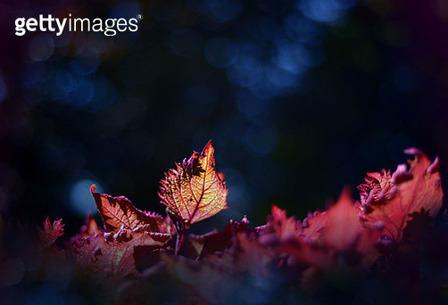 Close-Up Of Autumn Leaves - gettyimageskorea