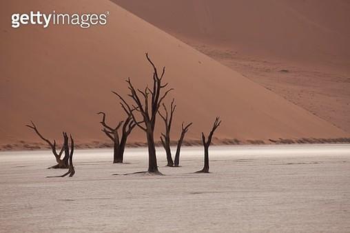 Dead trees in the Dead Vlei desert, Namib-Naukluft National Park, Skeleton Coast National Park, Hardap Region, Namibia - gettyimageskorea