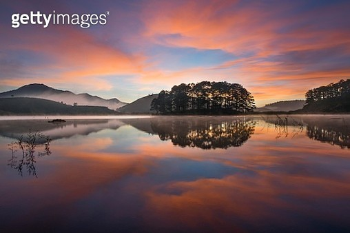 Reflective pine island on the dawn - gettyimageskorea