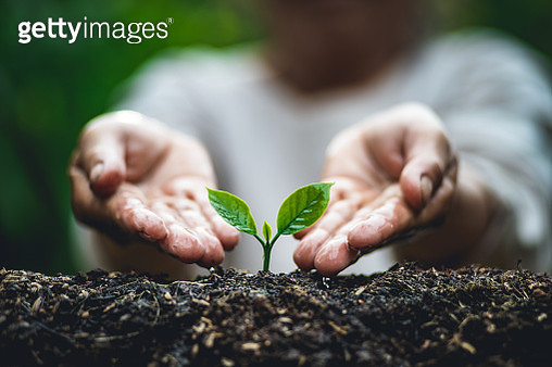 Midsection Of Person Watering Plant - gettyimageskorea