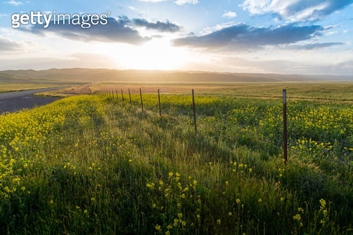 Sunset at roadside field in California while the spring time. - gettyimageskorea