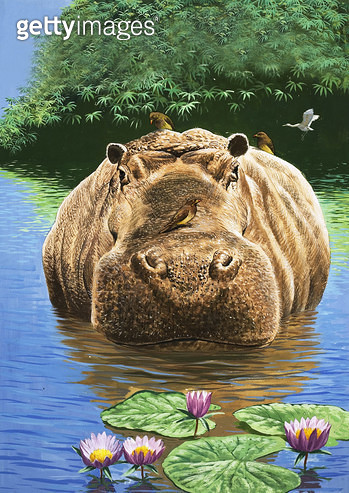 A Happy Hippo/ illustration from 'Nature's Wonderland'/ 1969 (gouache on paper) - gettyimageskorea